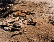 RICHARD MISRACH : DEAD ANIMALS #164
