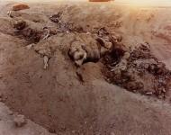 RICHARD MISRACH : DEAD ANIMALS #167