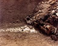 RICHARD MISRACH : DEAD ANIMALS #222