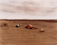 RICHARD MISRACH : DEAD ANIMALS #324