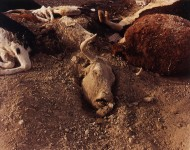 RICHARD MISRACH : DEAD ANIMALS #86